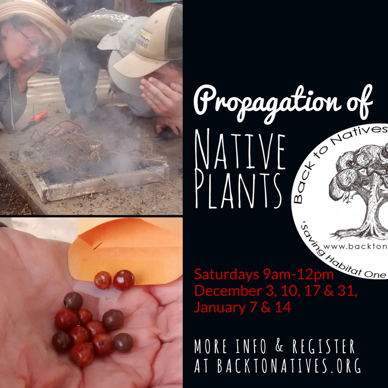 Propagation of Native Plants Tuesdays